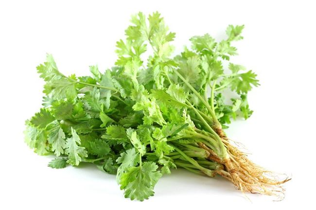 Picture of CORIANDER BUNCH