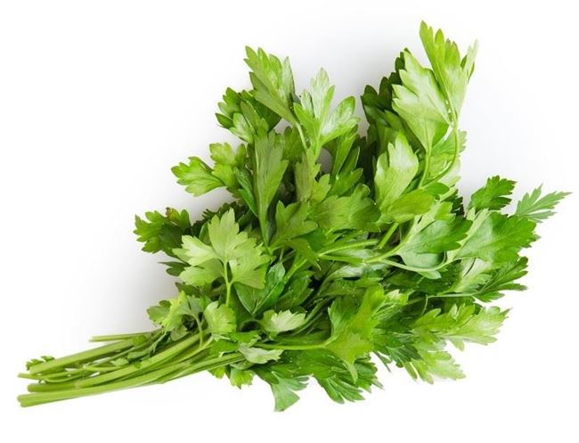 Picture of PARSLEY CONTINENTAL BUNCH